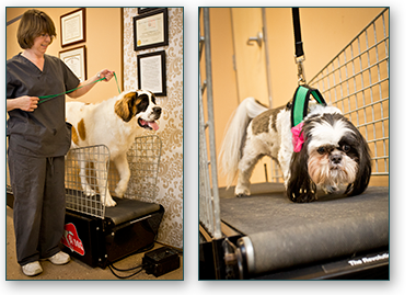 Dog Treadmill Greensboro