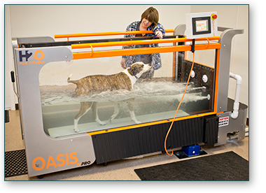 Underwater Dog Treadmill Greensboro